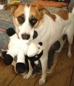 Speedy&VgT-cow