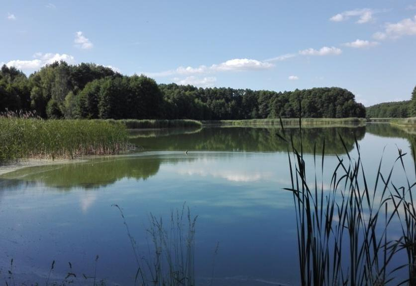 Dammersee_Panorama_Titelbild