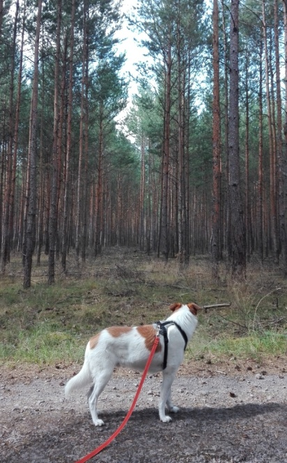 Doberburg_Speedy_da-is-was-im-Wald