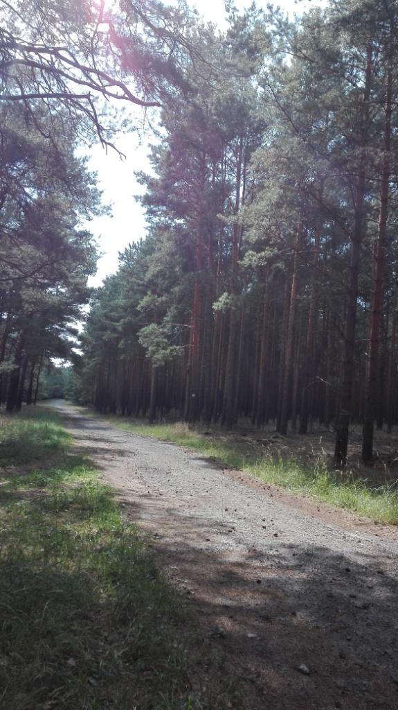 Doberburg_Waldweg-zum-Dammer-Moor_im-Sonnenlicht
