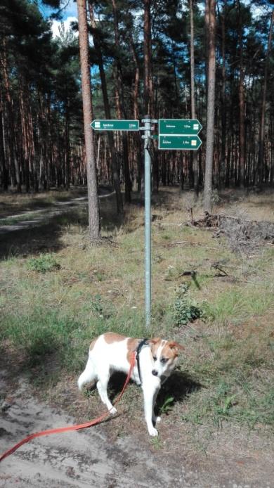 Doberburg_Wegweiser-mit-Speedy_nach-Goschen