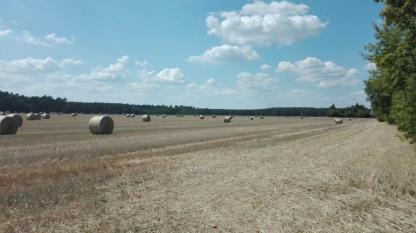 Siegadel_unendliche-Weiten-an-Feldern