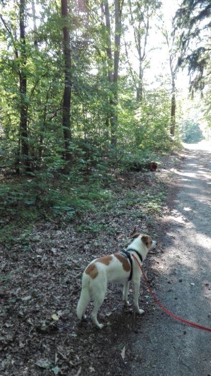 Speedy_Weg-zum-Forsthaus