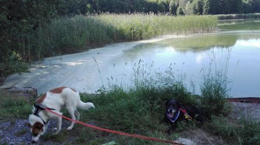 Speedy&Leah_am-Dammersee_Speedy-übt-schon-als-Suchhund