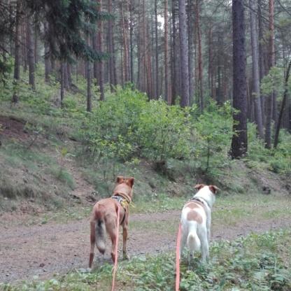 Waldspaziergang_Chekotee&Speedy-startklar!