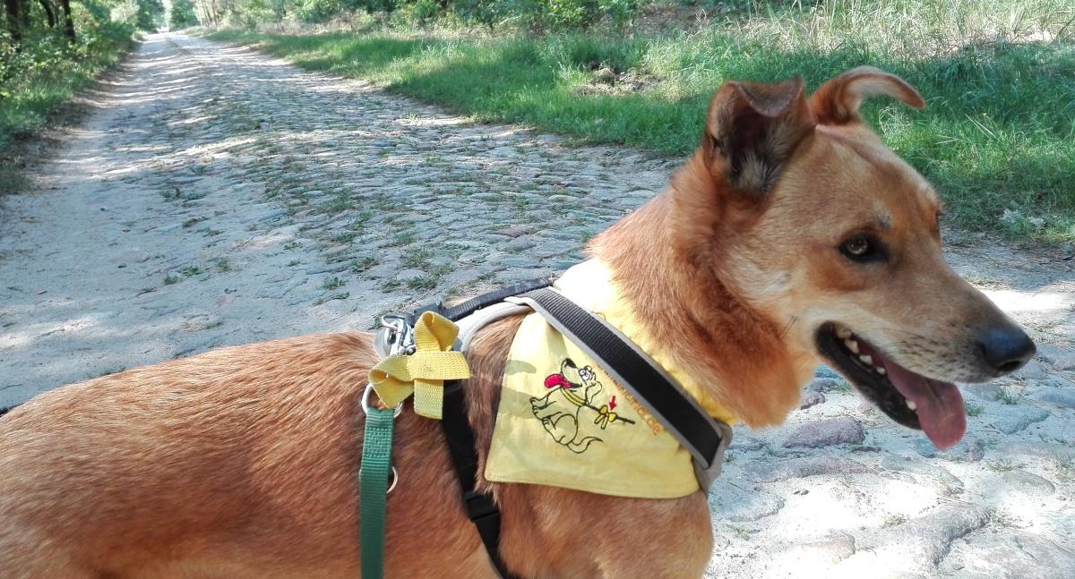 """TV-Superhunde"" sind KEINEAssistenzhunde"