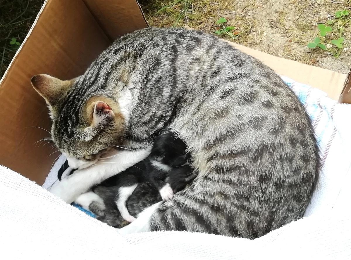 Pflegekatzen – schon vor derVereinsgründung