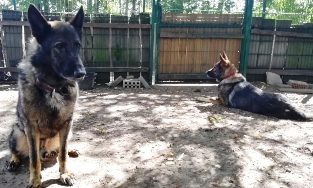 Neue Pflegehunde?!
