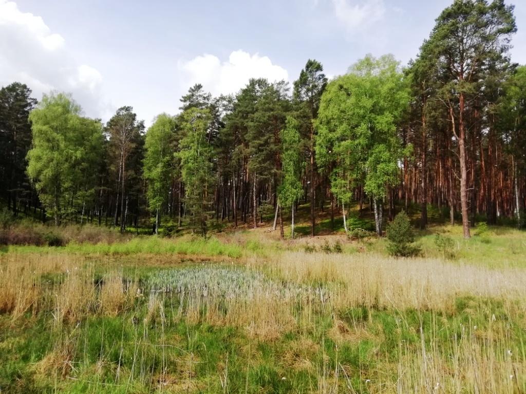 Trautzke-Seen und Moore – Teil 4:Trautzke-1