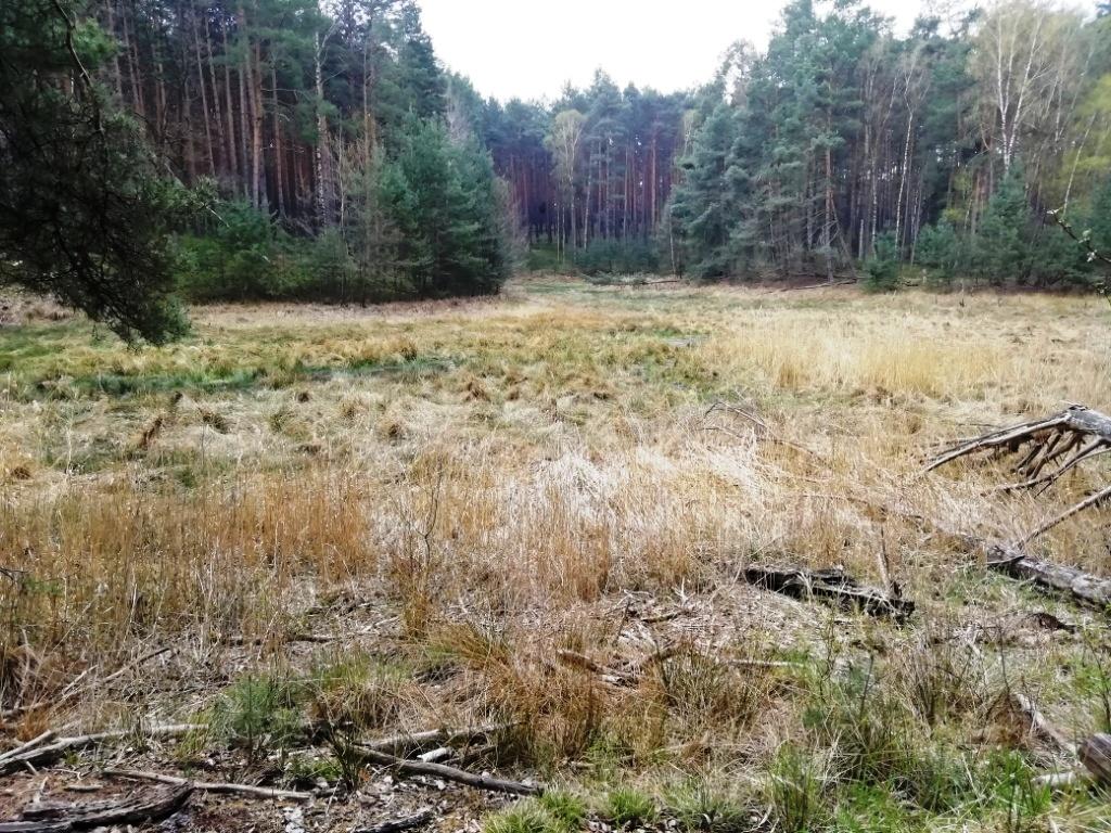 Trautzke-Seen und Moore: Geschichte undEtymologie